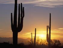 Saguaro National Park, Arizona.  © Christian Heeb